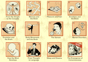 The Brain from Top to Bottom, an amazing interactive guide ...
